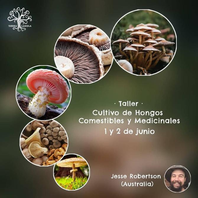 Taller de Cultivo de Hongos Comestibles y Medicinales