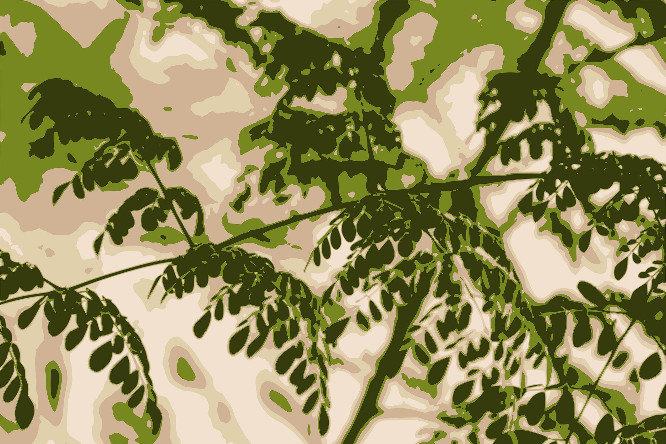 Tapiz hojas moringa con transparencia.pn