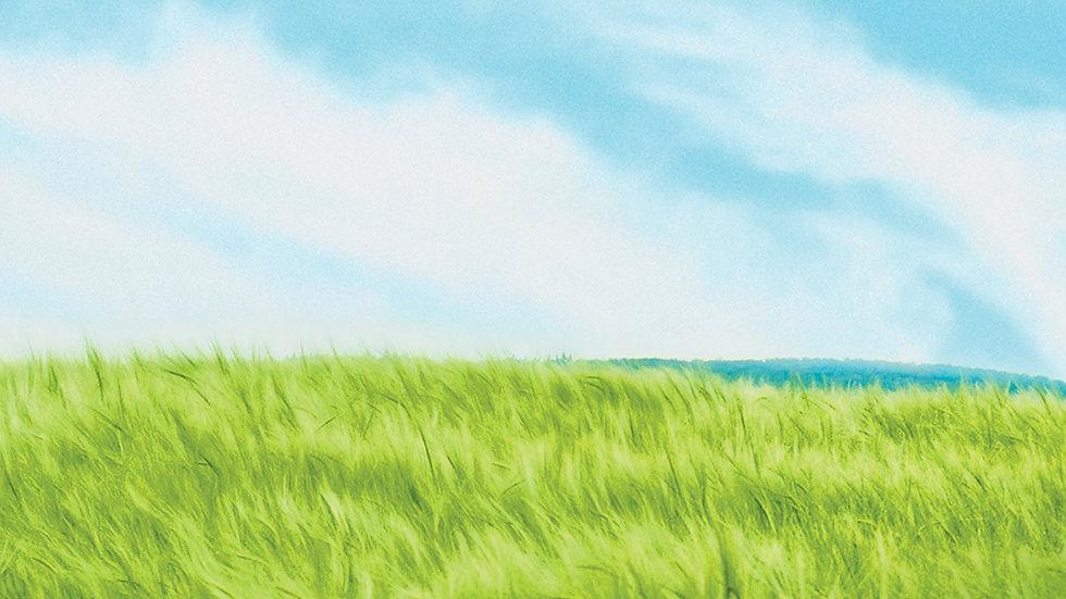 backgroundpsd.jpg