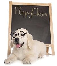 Puppies-0787.jpg