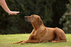 dog learning to stay.jpg.838x0_q67_crop-