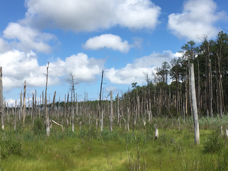 Notes from the Field: Measuring Ghost Forests