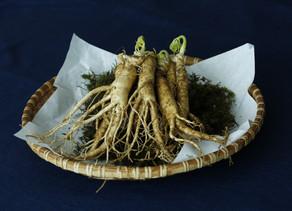 Ginseng Peruano está sendo usado na luta contra os sintomas da menopausa