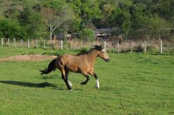 Cavalos do projeto Sela Verde, ganham função fundamental em novo método terapêutico criado por psicó