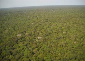 A Biodiversidade da Floresta Amazônica
