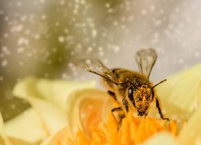 Projeto ecológico está resgastando abelhas  que migram para o centro urbano de Ji-Paraná, R0