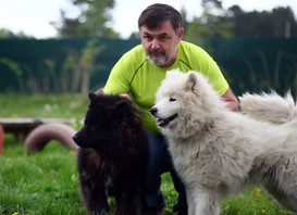 Две собаки - черная и белая