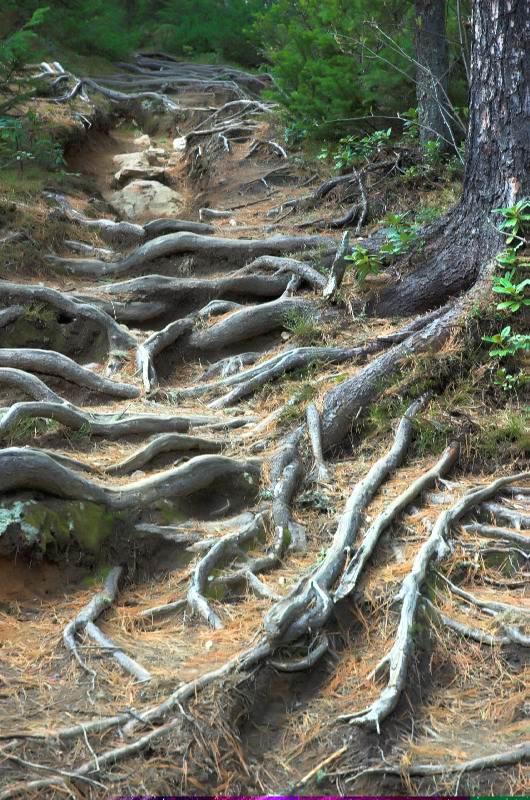 Путешествие Байкал. Дорога из корней