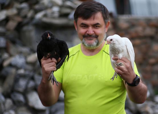 Черная и булая курица