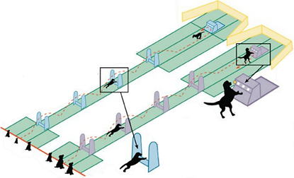 Flyball.Course.Web.png