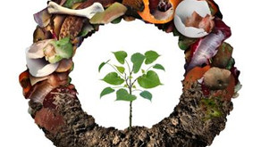 Reduce Waste + Feed the Earth (Announcing Info Session!)