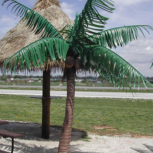 "6""COCONUT PALM"