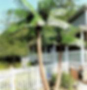 Key West palm trees.jpg