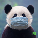 Panda Mask.png