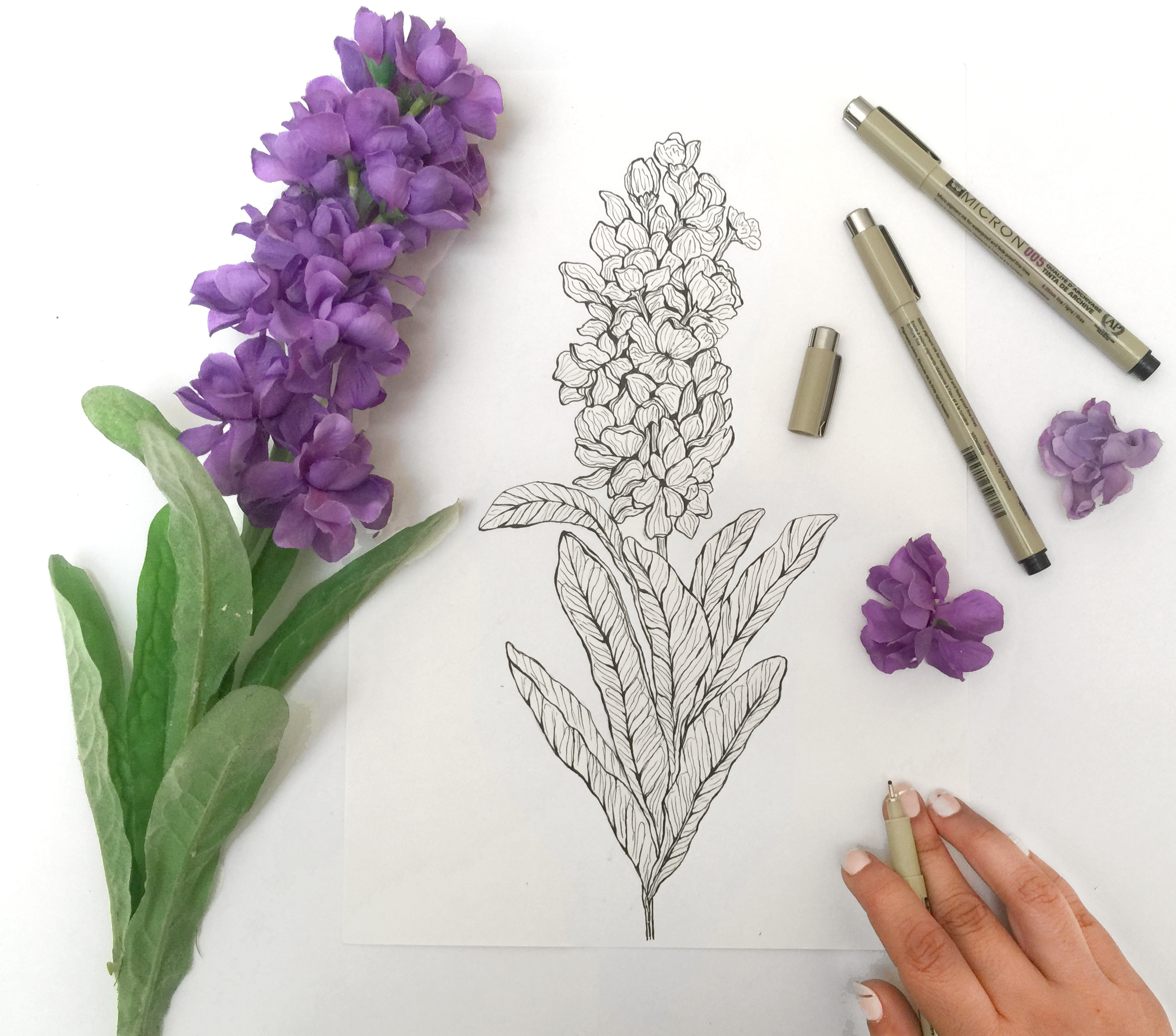 Illustrated Lavender