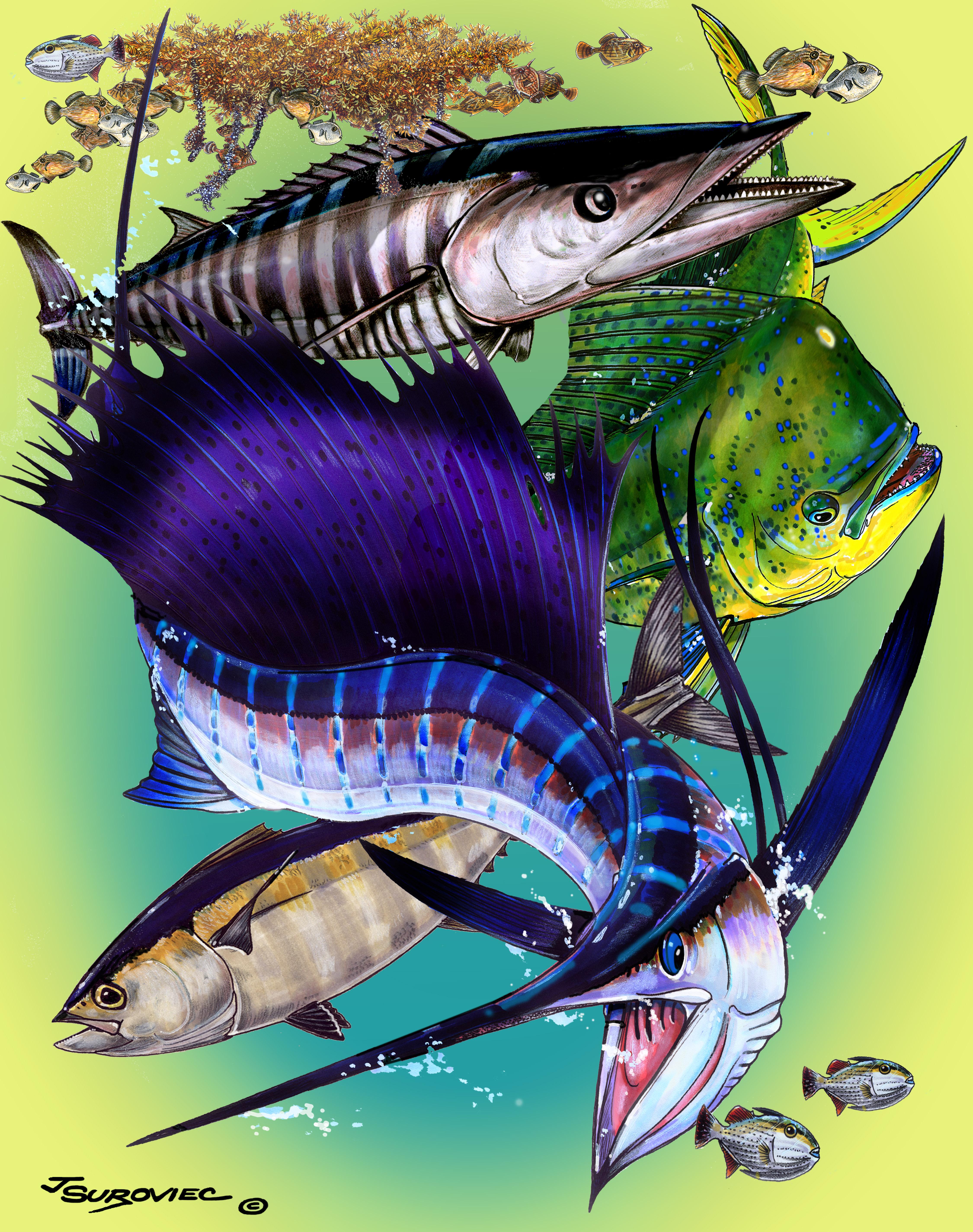 Offshore quartet