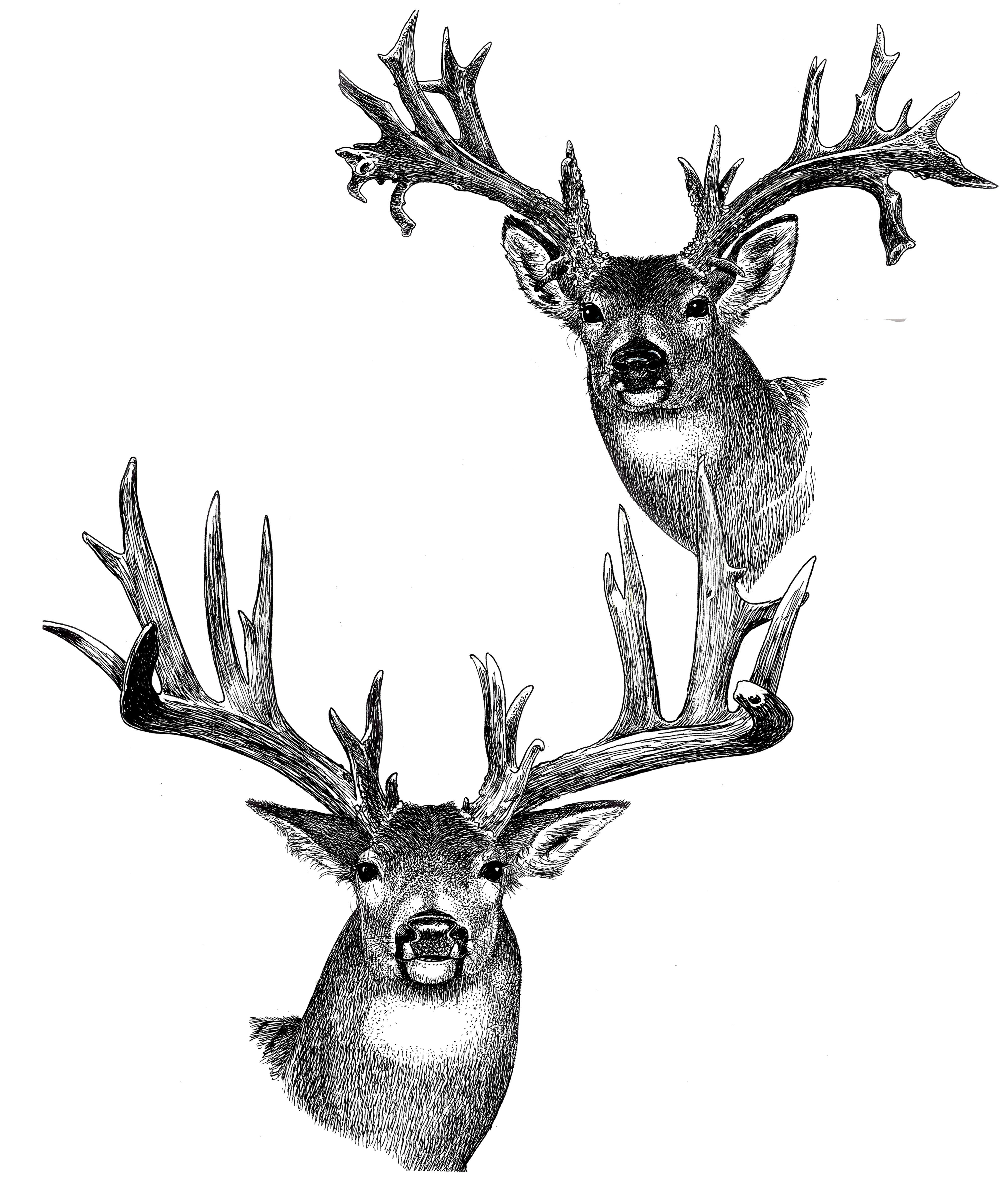 lano deer tee