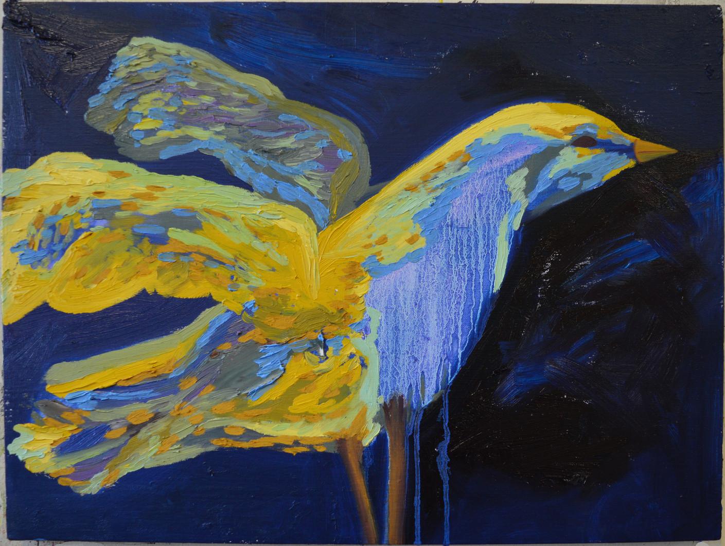 Night Gull