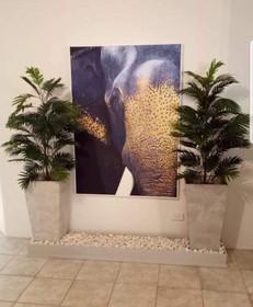 Areca Palm Trees - Elephant.jpg