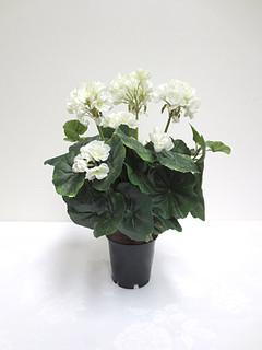 Geranium Bush (14in) [White]