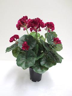 Geranium Bush (14in) [Dark Pink)