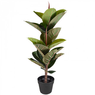 Rubber Tree (2.5ft) [Real Touch]