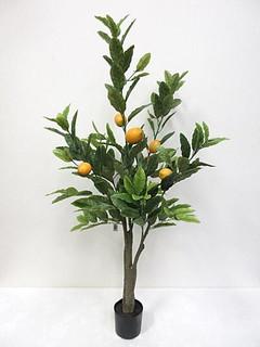 Lemon Tree (4ft)