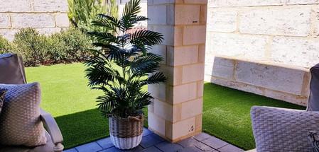 Areca Palm - Al Fresco.jpg