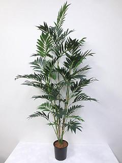 Bamboo Tree (7ft)