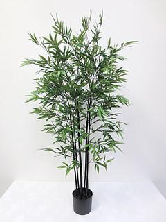 Mini Black Bamboo Tree (5ft)