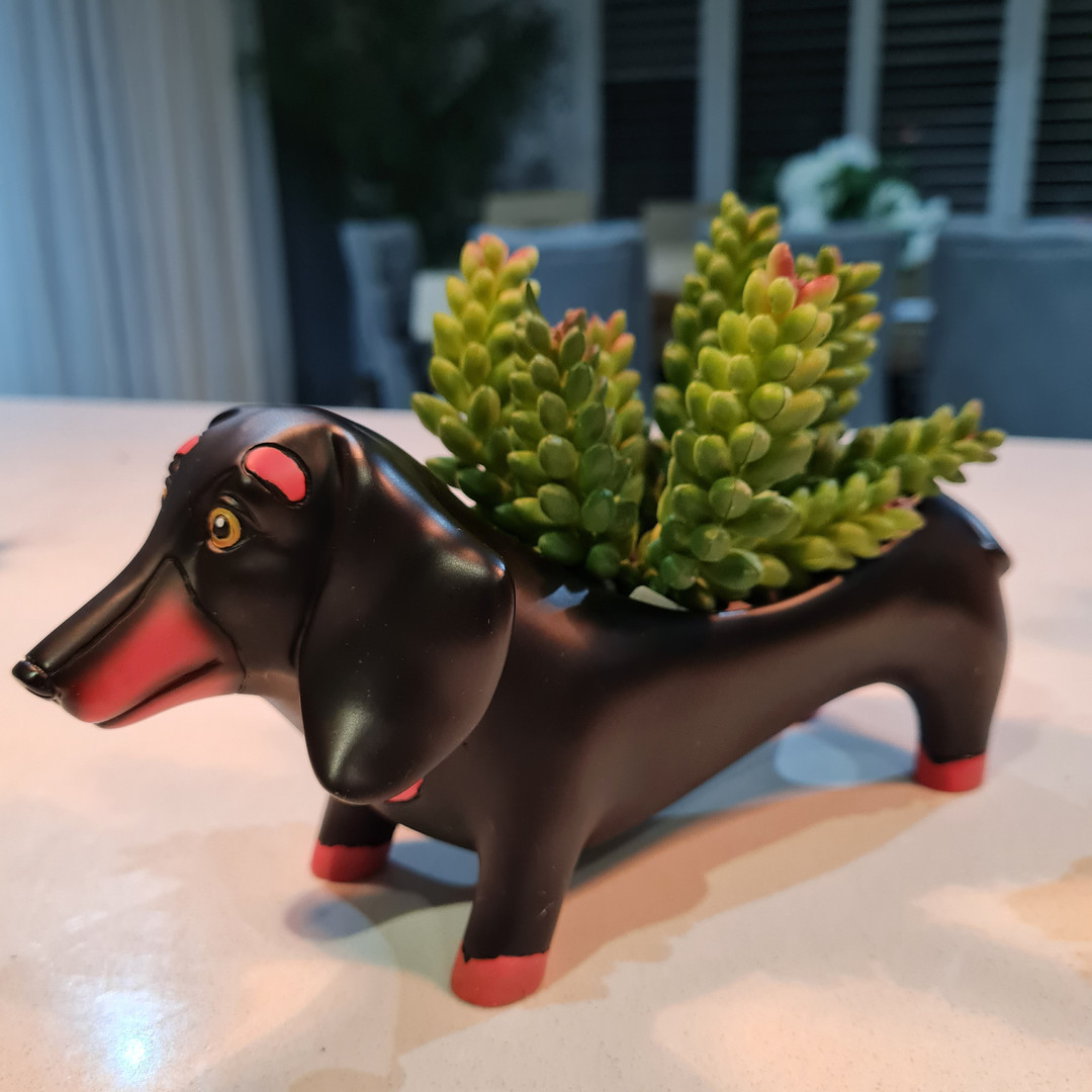 (SOLD OUT) Baby Duke Dog Planter Only $29.99