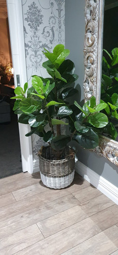 Real Touch Fiddle Fig.jpg