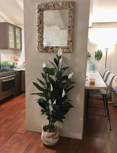 Peace Lily - In Home.jpg