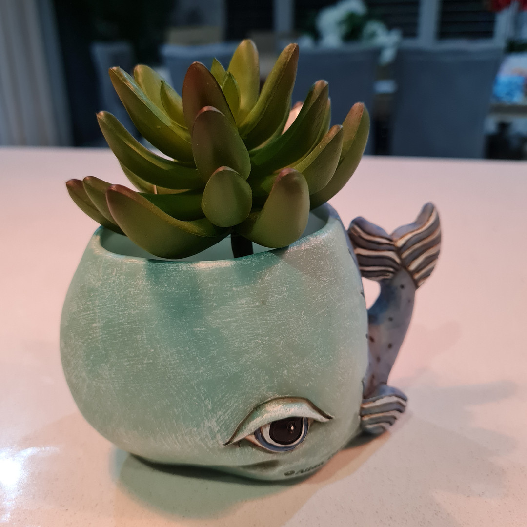 Baby Whale Planter Only $29.99