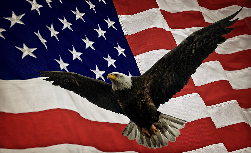 Bald eagle with wings spread in front of an American flag