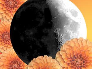 Moon in Leo. Taurus Season 2019