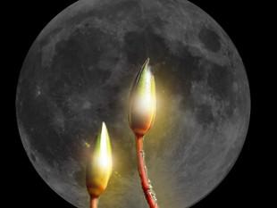 Moon in Aries. Aries Season2019