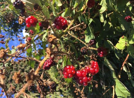 Journey Through Autumn & The Seasonal Playlist