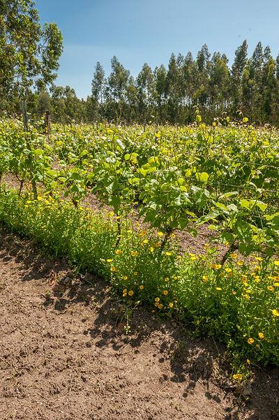 IMG280_Cata_en_Jerez_TTS_16_Soil,_Vineya