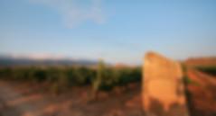 El Bosque03.jpg