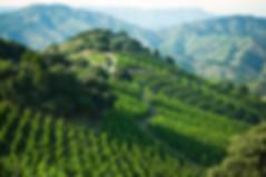 ferrer_bobet_respect_landscaping_6.jpg