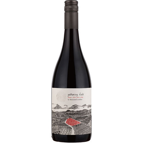 Gathering Field Shiraz 2017