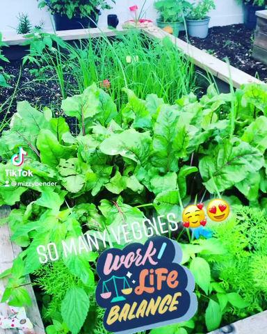 Grow veggies grow