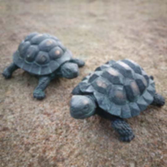 Set of 2 Tortoises