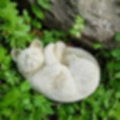 Small Cat B