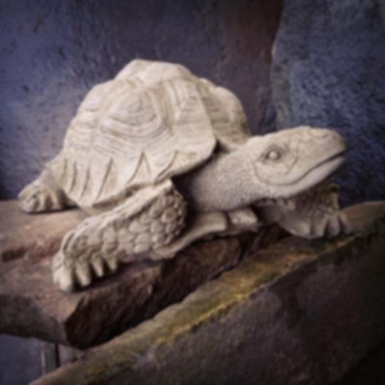 Tortoise Medium