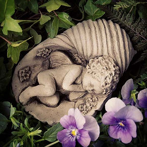 Cherub in Shell