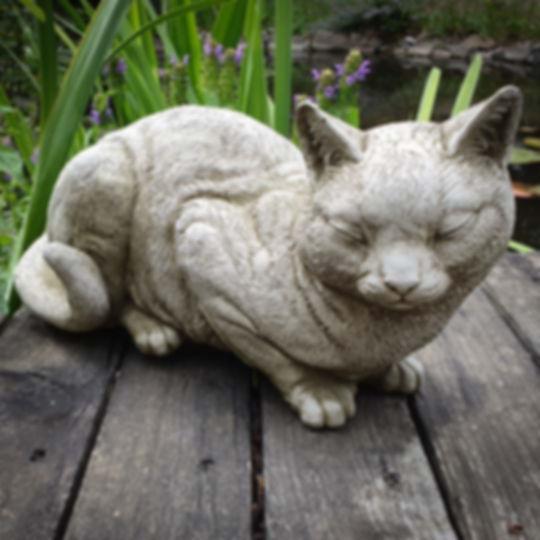 Snoozing Cat