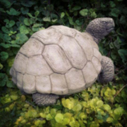 Tortoise Giant