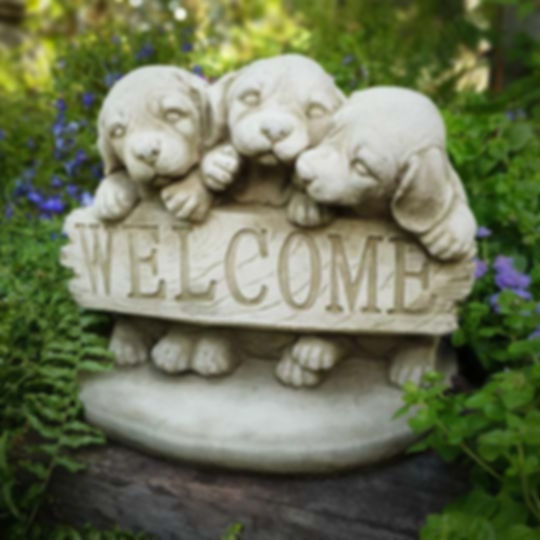 Welcome Puppies